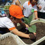 野菜を植えたよ!!